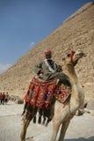 Jinete del camello de Egipto Fotos de archivo