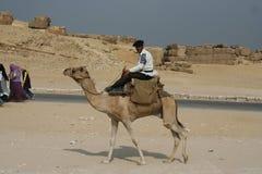 Jinete del camello de Egipto Imagen de archivo