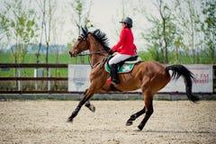 Jinete ecuestre del caballo Represente mostrar a un competidor que se realiza en la competencia de salto de demostración fotos de archivo libres de regalías