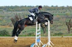 Jinete en caballo de bahía en la demostración de salto Imagenes de archivo