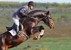 Jinete en caballo de bahía en la demostración de salto Fotos de archivo