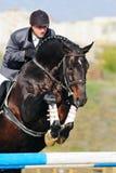 Jinete en caballo de bahía en la demostración de salto fotografía de archivo