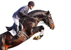Jinete en caballo de bahía en la demostración de salto, aislada Imagenes de archivo