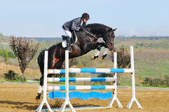 Jinete en caballo de bahía en la demostración de salto Foto de archivo