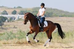 Jinete en caballo de la doma de la bahía, galope que va Imagen de archivo