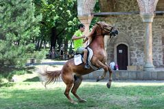Jinete en caballo de salto marrón en prado imagen de archivo libre de regalías