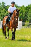 Jinete en caballo juguetón de la bahía Imagen de archivo
