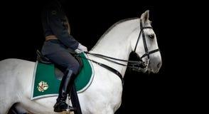 Jinete en el caballo blanco del trotón de Orlov, fondo negro Imágenes de archivo libres de regalías