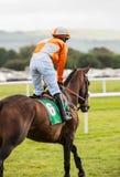 Jinete en el caballo de raza que va abajo de la pista Foto de archivo libre de regalías