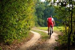 Jinete en la bicicleta de la montaña él el bosque Foto de archivo libre de regalías