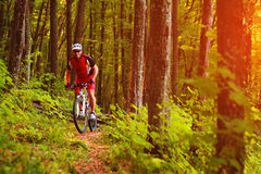 Jinete en la bicicleta de la montaña él el bosque Fotografía de archivo libre de regalías