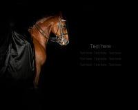 Jinete en vestido negro en un caballo Foto de archivo