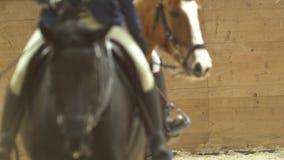 Jinete femenino en el caballo rideing en la competencia de salto de demostración almacen de video