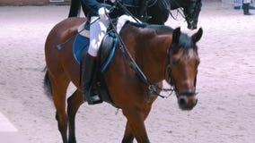 Jinete femenino en el caballo rideing en la competencia de salto de demostración almacen de metraje de vídeo