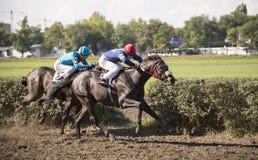 Jinete hermoso de ROSTOV-ON-DON, RUSIA 22 de septiembre - en un caballo Imágenes de archivo libres de regalías