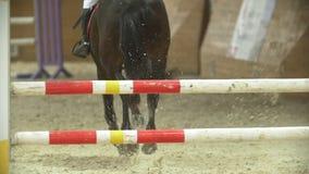 Jinete joven en el caballo negro que galopa en la competencia de salto de demostración almacen de video