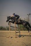 Jinete que monta un caballo excelente rápido Fotografía de archivo