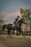 Jinete que monta un caballo excelente rápido Imagen de archivo