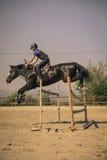 Jinete que monta un caballo excelente rápido Foto de archivo libre de regalías