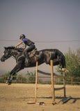 Jinete que monta un caballo excelente rápido Fotografía de archivo libre de regalías