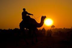 Jinete silueteado del camello en la puesta del sol imagenes de archivo
