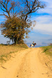 Jinete solo del caballo Fotografía de archivo