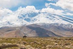Jinete solo en paisaje de la montaña Fotografía de archivo libre de regalías