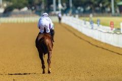 Jinete Track del caballo de raza Foto de archivo libre de regalías