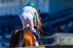 Jinete Track del caballo de raza Imagen de archivo