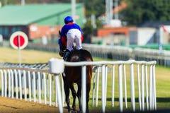 Jinete Track del caballo de raza Foto de archivo