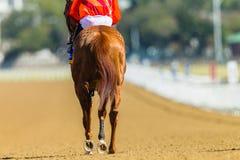 Jinete Track del caballo de raza Fotografía de archivo