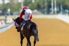 Jinete Track del caballo de raza Fotos de archivo libres de regalías