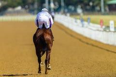 Jinete Track del caballo de raza Imágenes de archivo libres de regalías
