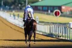 Jinete Track del caballo de raza Imagenes de archivo