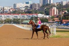 Jinete Track del caballo de raza Fotos de archivo
