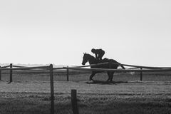 Jinete Training Black White del caballo de raza Fotos de archivo libres de regalías