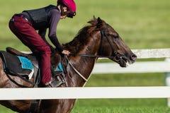 Jinete Training Closeup del caballo de raza Imagen de archivo libre de regalías