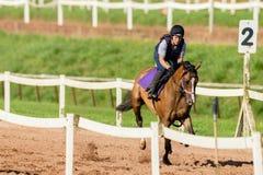 Jinete Training de la muchacha del caballo de raza Imágenes de archivo libres de regalías
