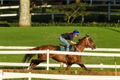 Jinete Training Run Track de la muchacha del caballo de raza Foto de archivo libre de regalías
