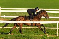Jinete Training Run Track del caballo de raza Imágenes de archivo libres de regalías