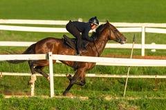 Jinete Training Run Track del caballo de raza Fotos de archivo libres de regalías