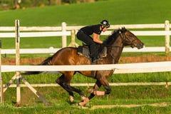 Jinete Training Run Track del caballo de raza Imagen de archivo