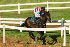 Jinete Training Run Track del caballo de raza Foto de archivo libre de regalías