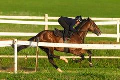 Jinete Training Track del caballo de raza Fotografía de archivo