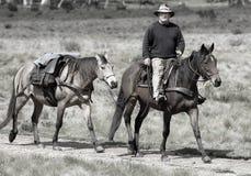 Jinete y caballo Foto de archivo libre de regalías