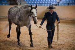 Jinete y caballo de caminar de raza español puro en la pista que comienza ejercicio ecuestre Imágenes de archivo libres de regalías