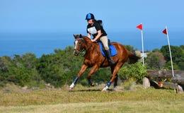 Jinete y caballo del campo a través Fotos de archivo