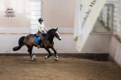 Jinete y caballo en escuela de montar a caballo Imagenes de archivo