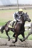 Jinete y caballo en una raza fotografía de archivo