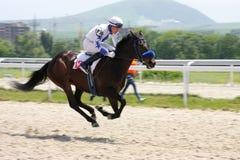Jinete y caballo en verano fotografía de archivo libre de regalías